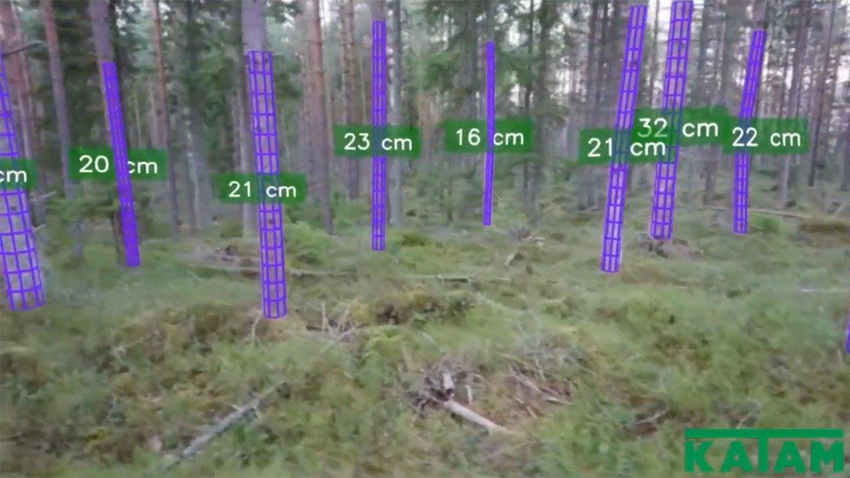 Mötesplatser - Skogskunskap